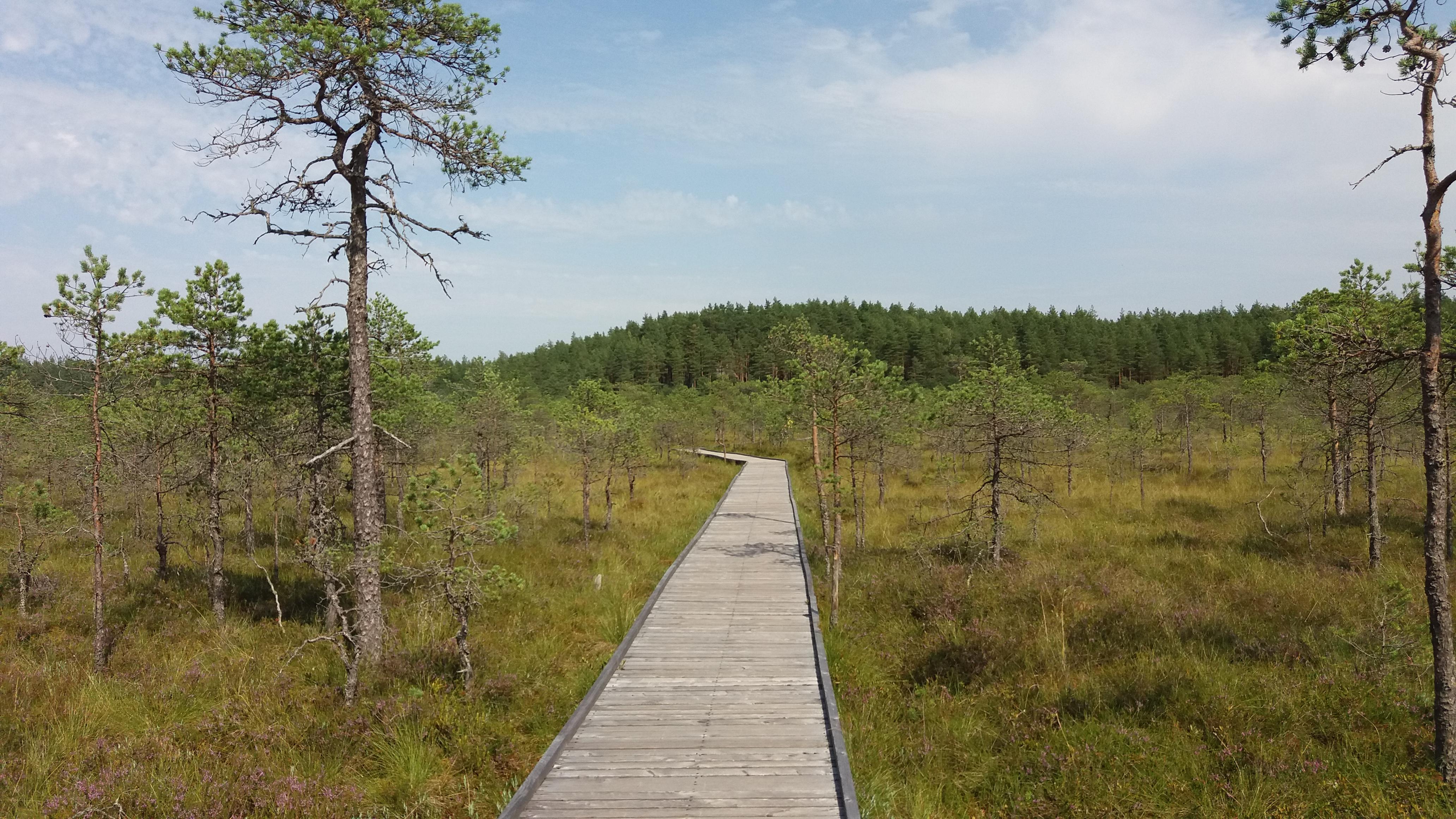 Loodusmatk 2017 (Meenikunno maastikukaitsealale) 8